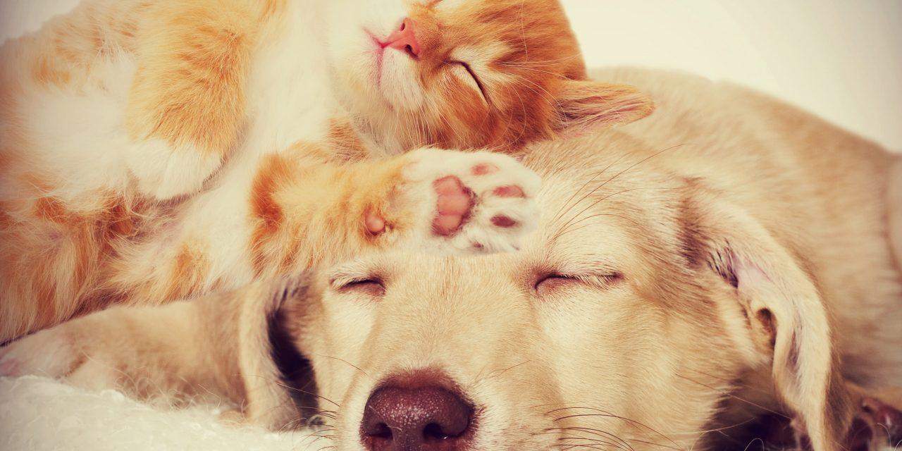 4 dicas para cuidar de cães e gatos em apartamento
