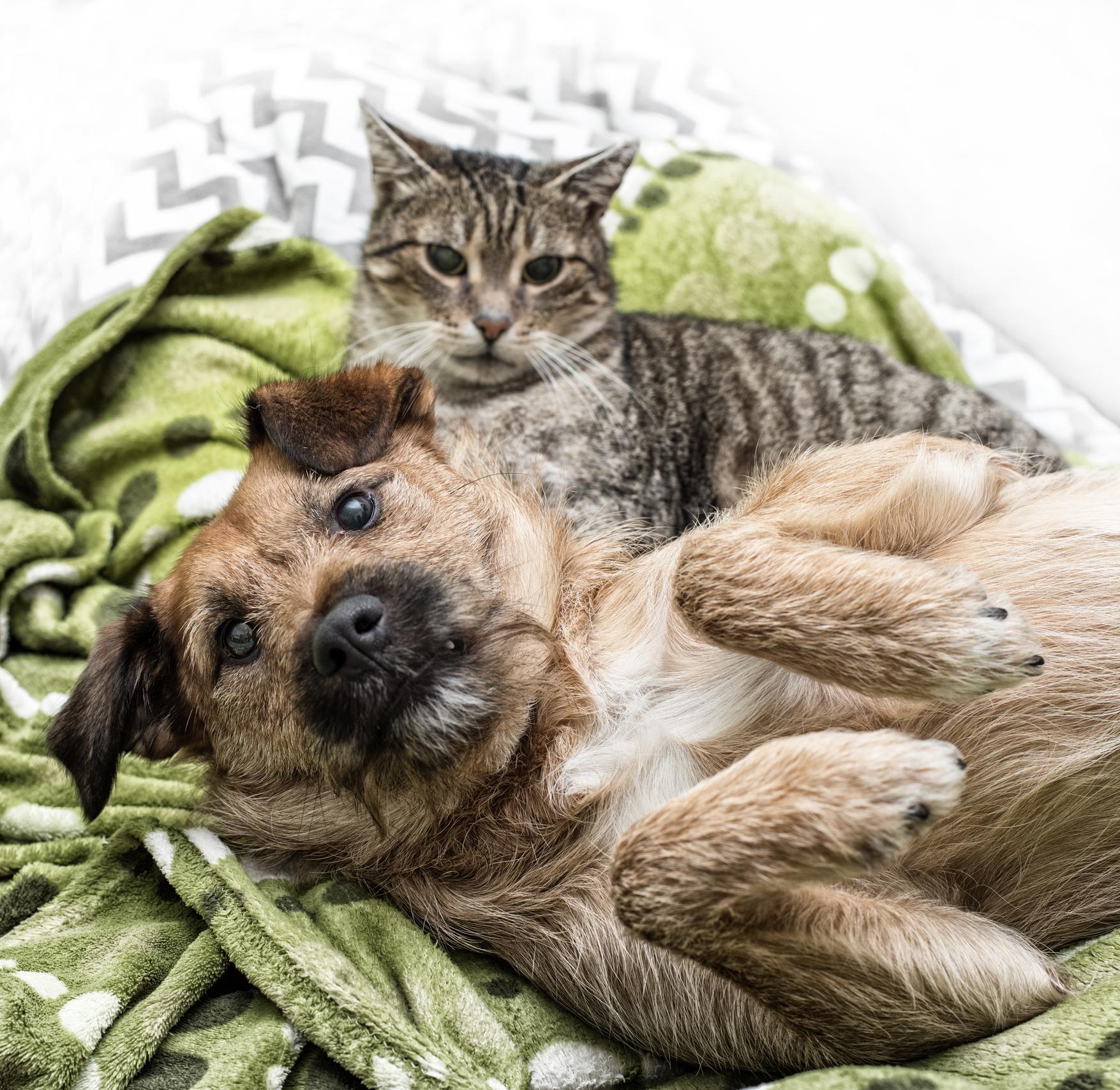 cães e gatos em apartamento