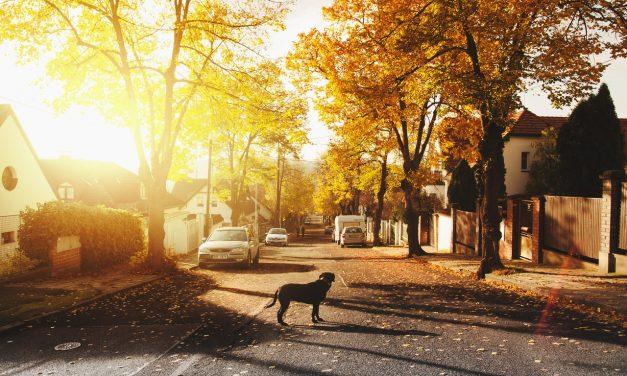 4 dicas de como analisar a vizinhança do seu futuro imóvel